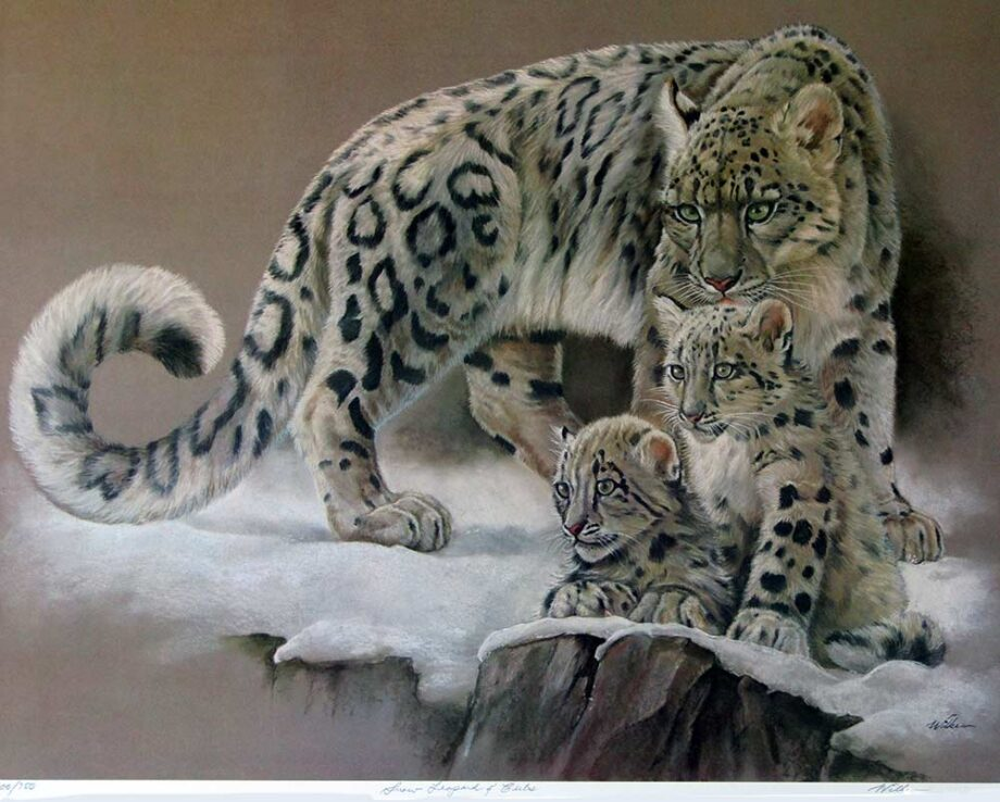 Snow Leopard and Cubs by Patricia Wilke Tadena a limited edition art print