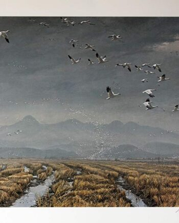 Robert Bateman for Mill Pond Press limited edition lithograph titled Across the Sky - Snow Geese