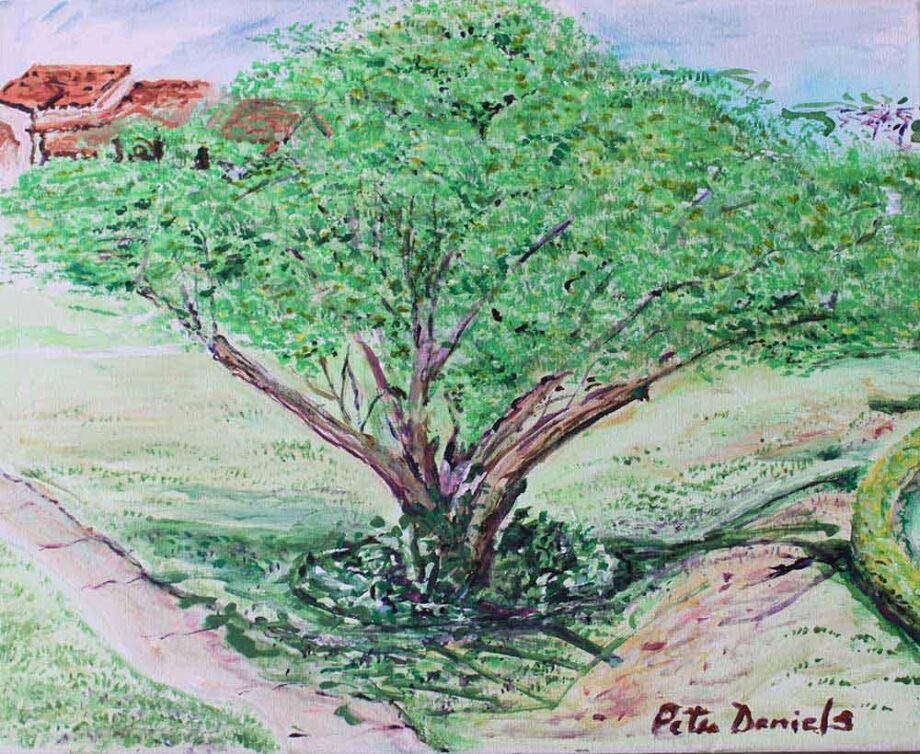 Tree - Original Acrylic Painting by Peter Daniels
