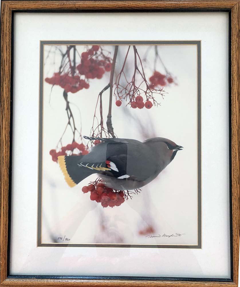 Thomas D. Mangelsen Bohemian Waxwing Bird on a Branch framed limited edition art print